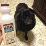 The Benefits of Raw Goat Milk for Your Pet