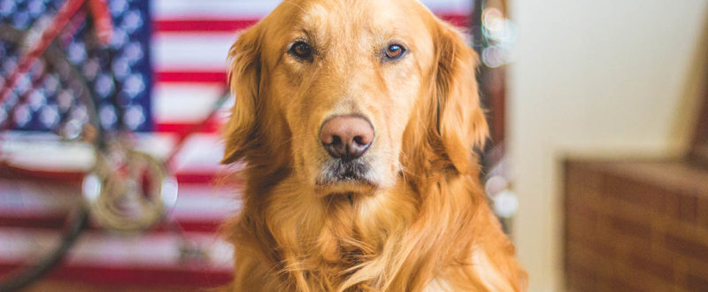tips for keep your pet calm during fireworks